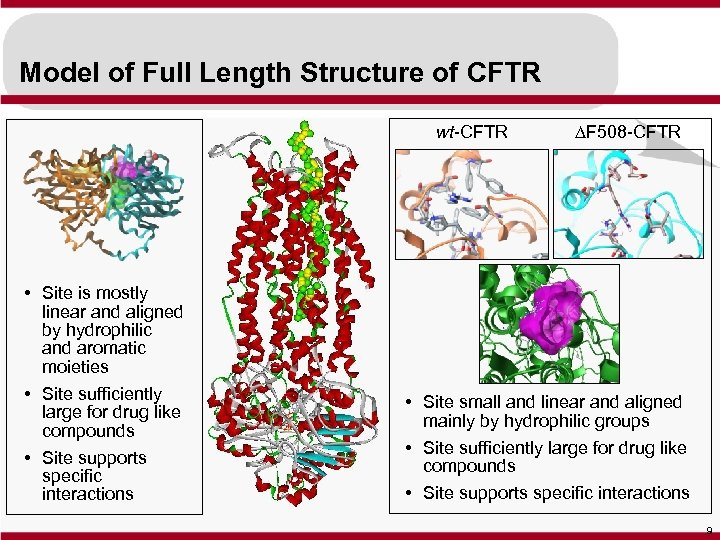 Model of Full Length Structure of CFTR wt-CFTR • Site is mostly linear and