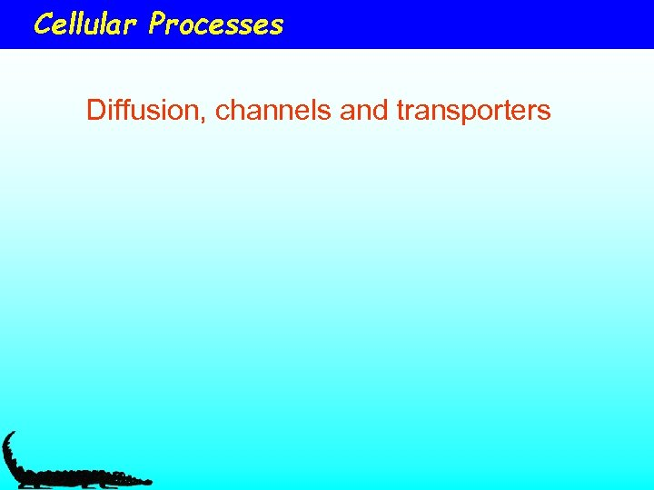 Cellular Processes Diffusion, channels and transporters
