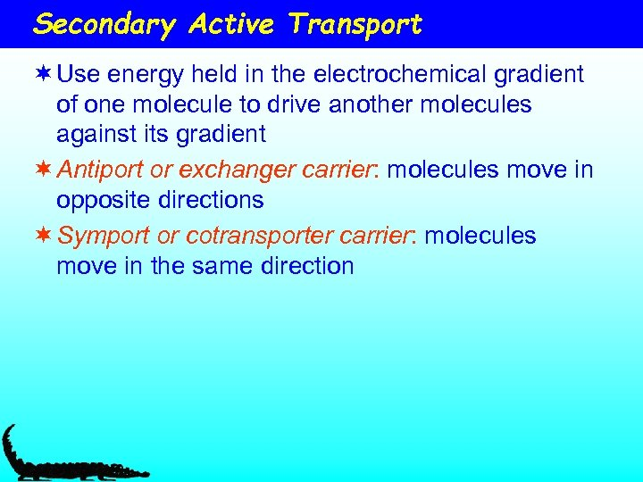 Secondary Active Transport ¬ Use energy held in the electrochemical gradient of one molecule