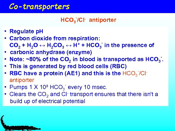 Co-transporters HCO 3 -/Cl- antiporter • Regulate p. H • Carbon dioxide from respiration:
