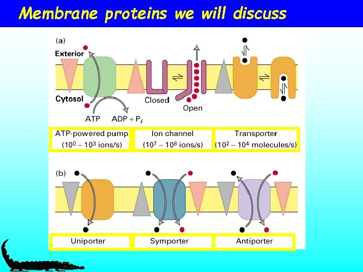 Membrane proteins we will discuss