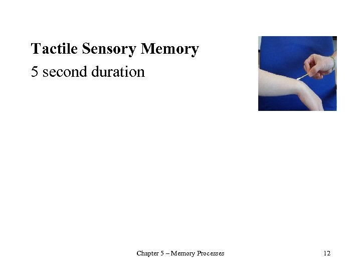 Tactile Sensory Memory 5 second duration Chapter 5 – Memory Processes 12