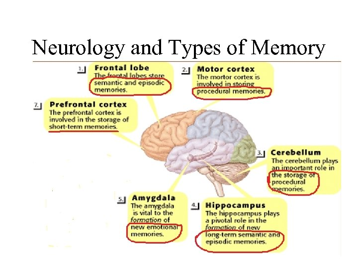 Neurology and Types of Memory Chapter 5 – Memory Processes 47