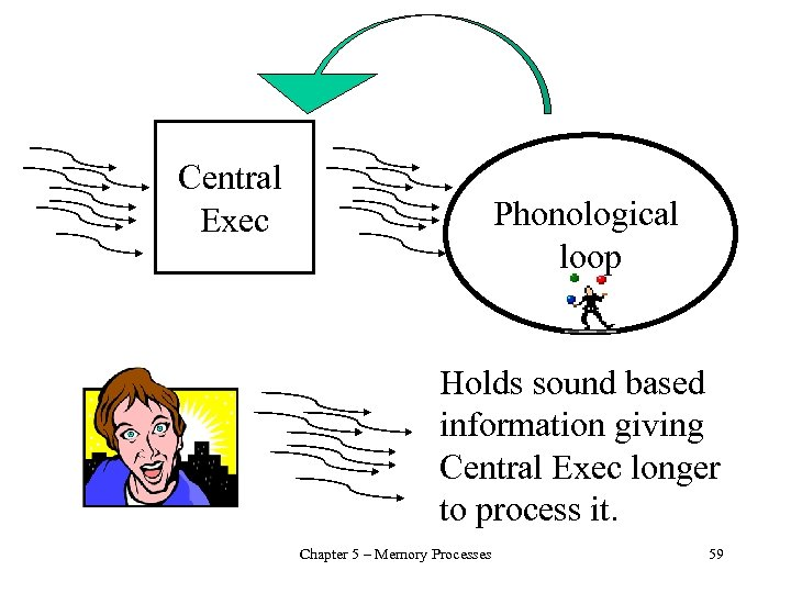 Central Exec Phonological loop Holds sound based information giving Central Exec longer to process