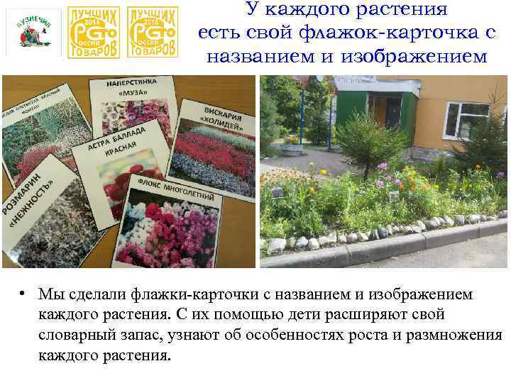 У каждого растения есть свой флажок-карточка с названием и изображением • Мы сделали флажки-карточки