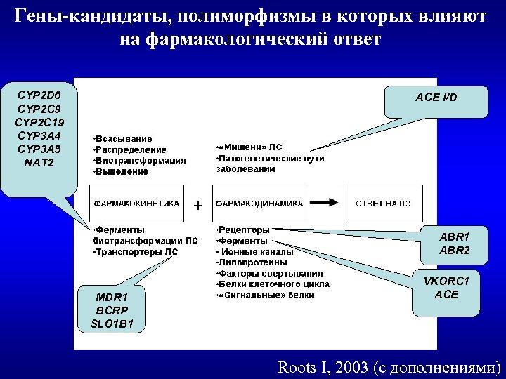 Гены-кандидаты, полиморфизмы в которых влияют на фармакологический ответ CYP 2 D 6 CYP 2