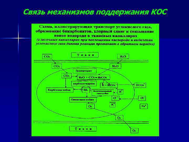 Связь механизмов поддержания КОС