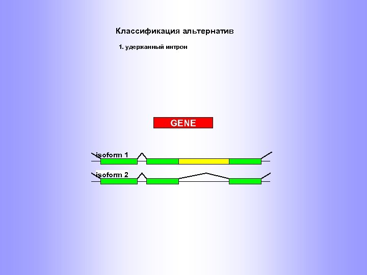 Классификация альтернатив 1. удержанный интрон GENE isoform 1 isoform 2
