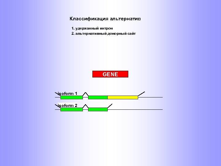 Классификация альтернатив 1. удержанный интрон 2. альтернативный донорный сайт GENE isoform 1 isoform 2