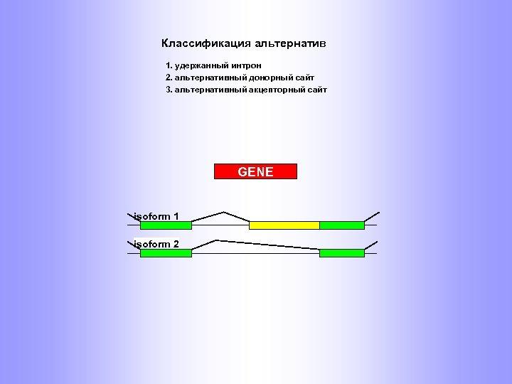 Классификация альтернатив 1. удержанный интрон 2. альтернативный донорный сайт 3. альтернативный акцепторный сайт GENE