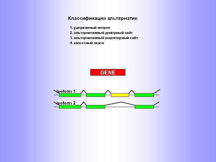 Классификация альтернатив 1. удержанный интрон 2. альтернативный донорный сайт 3. альтернативный акцепторный сайт 4.