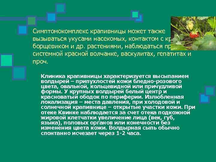 Симптомокомплекс крапивницы может также вызываться укусами насекомых, контактом с крапивой, борщевиком и др. растениями,