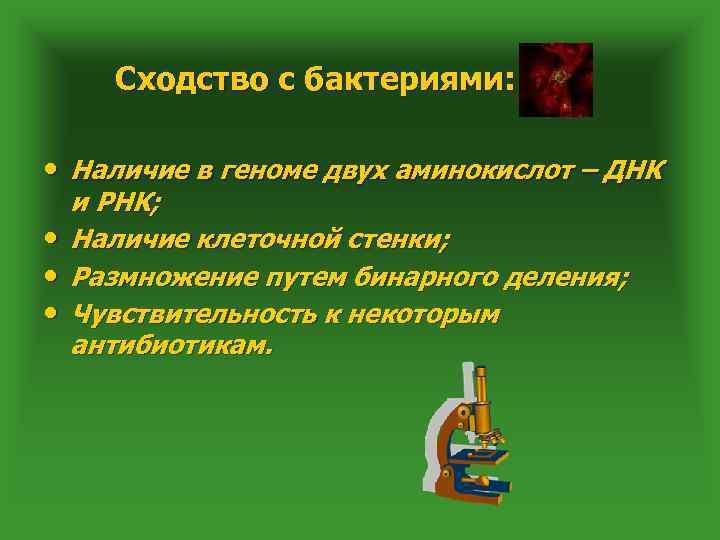 Сходство с бактериями: • Наличие в геноме двух аминокислот – ДНК • • •