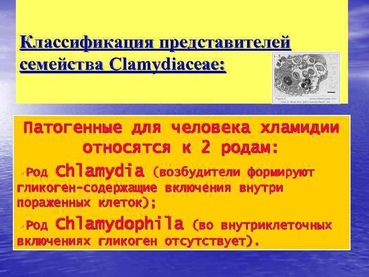Классификация представителей семейства Clamydiaceae: Патогенные для человека хламидии относятся к 2 родам: • Род