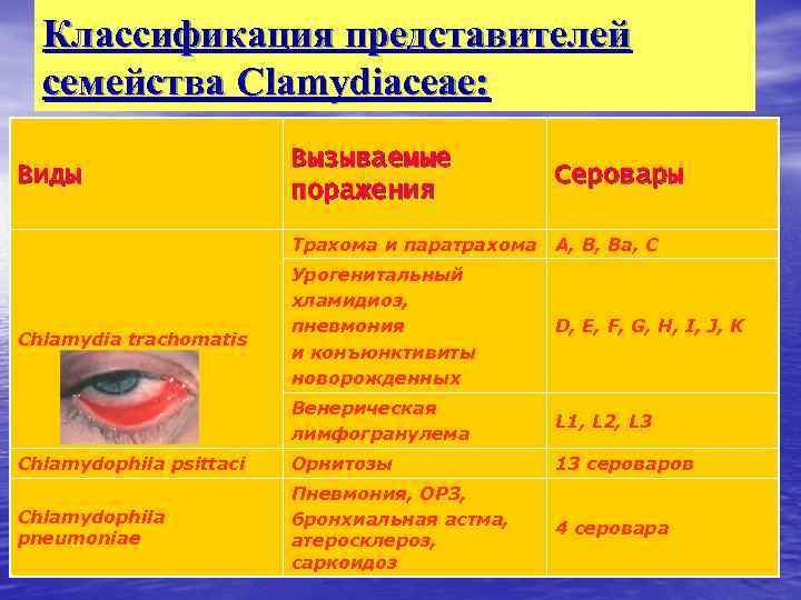 Классификация представителей семейства Clamydiaceae: Вызываемые поражения Серовары Трахома и паратрахома А, В, Ва, С