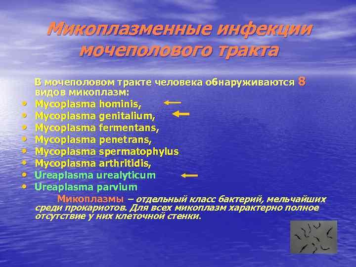 Микоплазменные инфекции мочеполового тракта • • В мочеполовом тракте человека обнаруживаются 8 видов микоплазм: