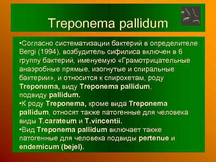 Treponema pallidum • Согласно систематизации бактерий в определителе Bergi (1994), возбудитель сифилиса включен в
