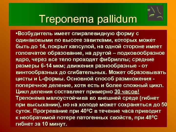 Treponema pallidum • Возбудитель имеет спиралевидную форму с одинаковыми по высоте завитками, которых может