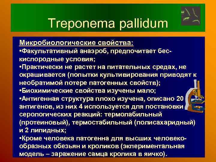 Treponema pallidum Микробиологические свойства: • Факультативный анаэроб, предпочитает бескислородные условия; • Практически не растет