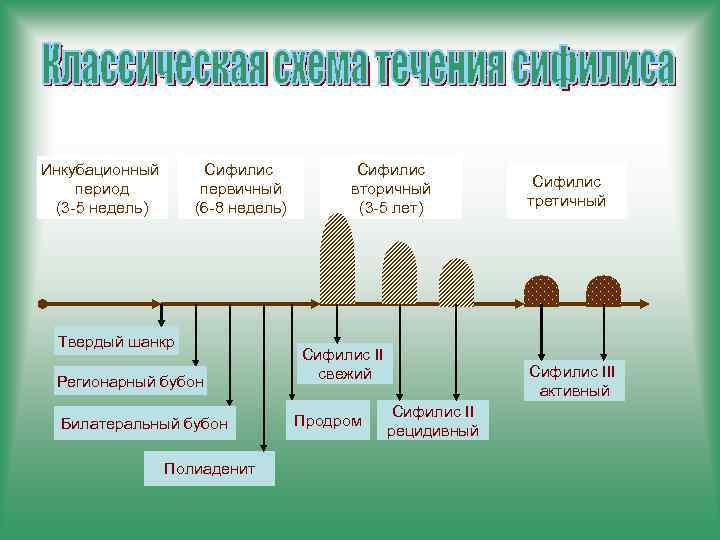 Инкубационный период (3 -5 недель) Сифилис первичный (6 -8 недель) Твердый шанкр Регионарный бубон