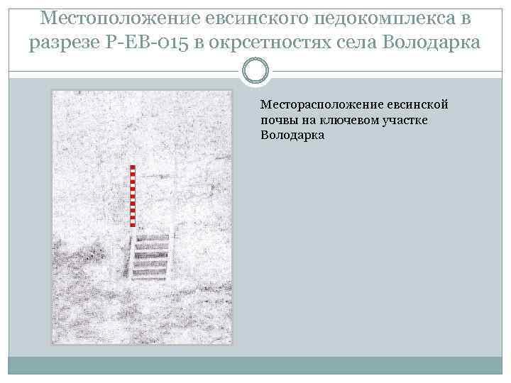 Местоположение евсинского педокомплекса в разрезе Р-ЕВ-015 в окрсетностях села Володарка Месторасположение евсинской почвы на