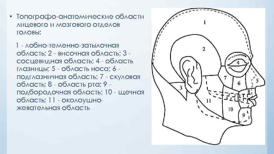 схема области головы