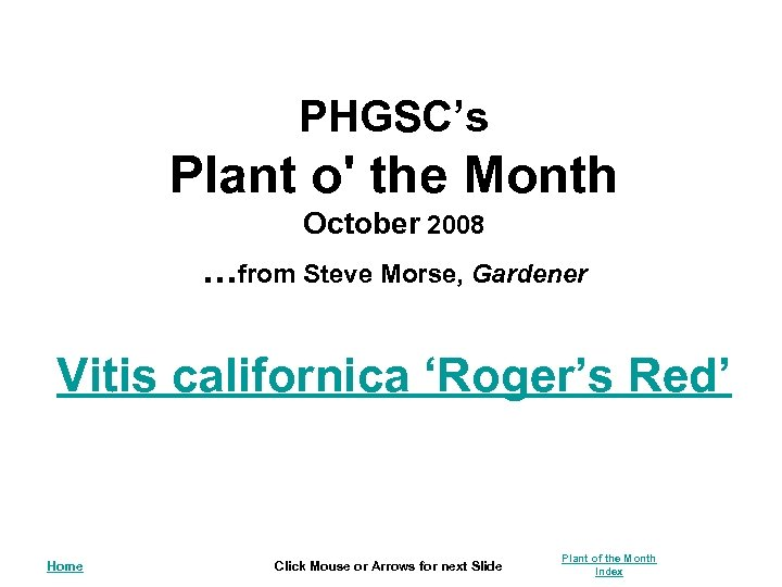 PHGSC's Plant o' the Month October 2008 . . . from Steve Morse, Gardener