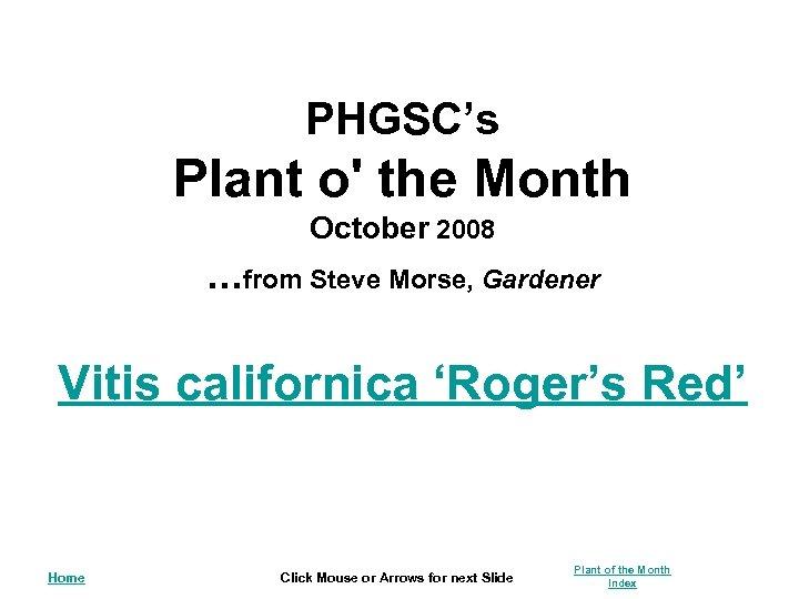 PHGSC's Plant o' the Month October 2008 . . . from Steve Morse, Gardener