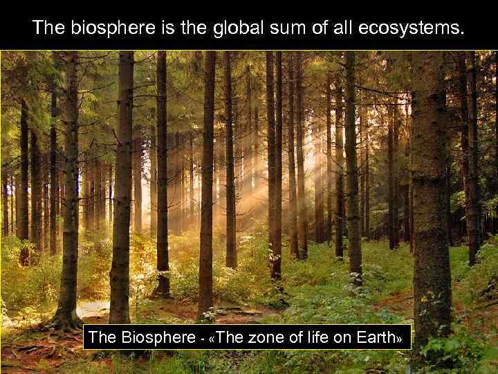 The biosphere is the global sum of all ecosystems. The Biosphere - «The zone