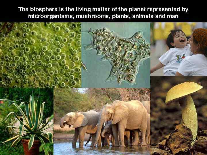 The biosphere is the living matter of the planet represented by microorganisms, mushrooms, plants,