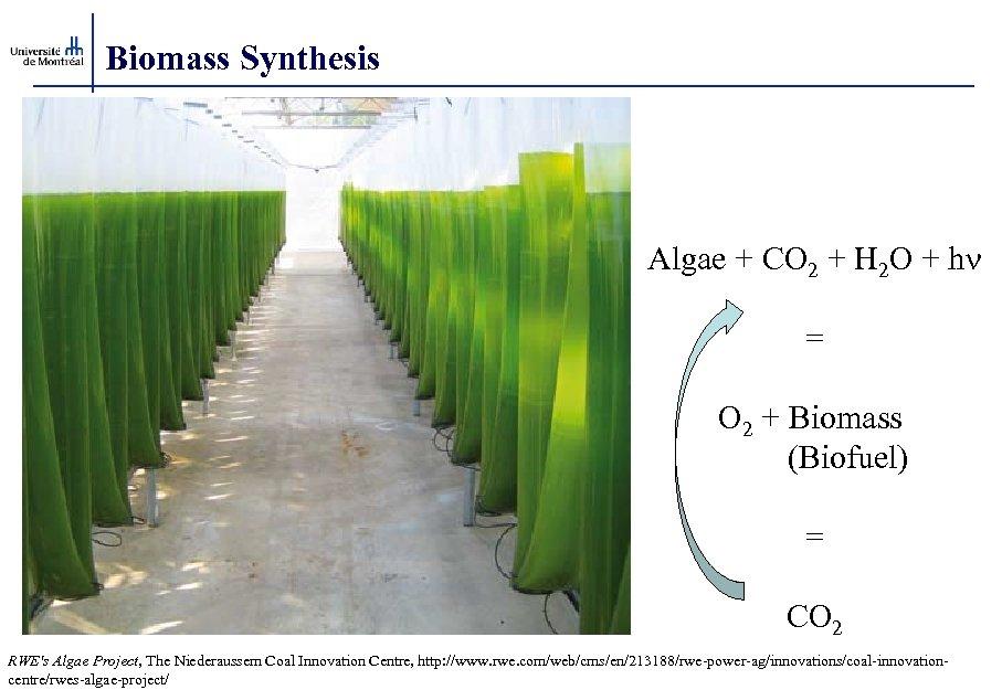 Biomass Synthesis Algae + CO 2 + H 2 O + hn = O