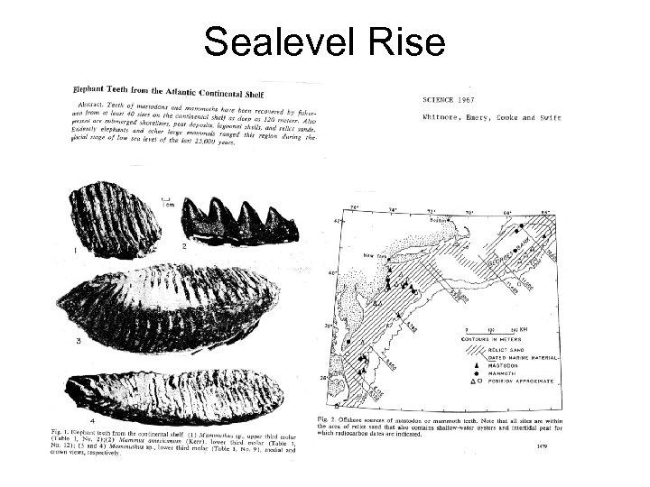 Sealevel Rise
