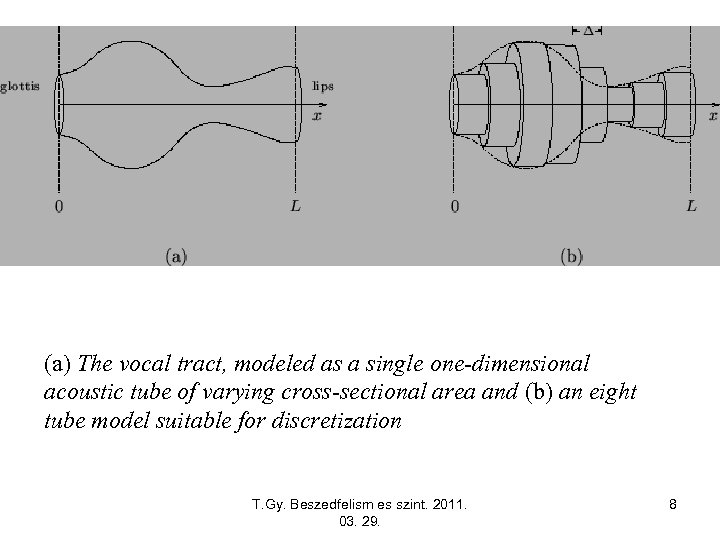 (a) The vocal tract, modeled as a single one-dimensional acoustic tube of varying cross-sectional
