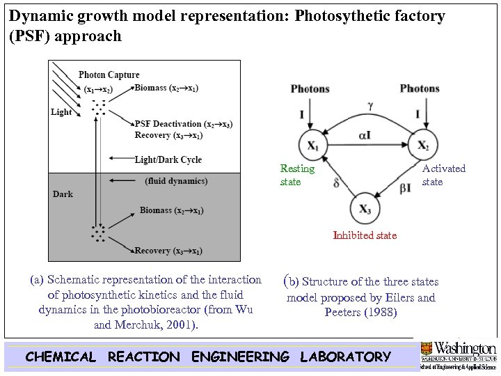 Dynamic growth model representation: Photosythetic factory (PSF) approach Resting state Activated state Inhibited state