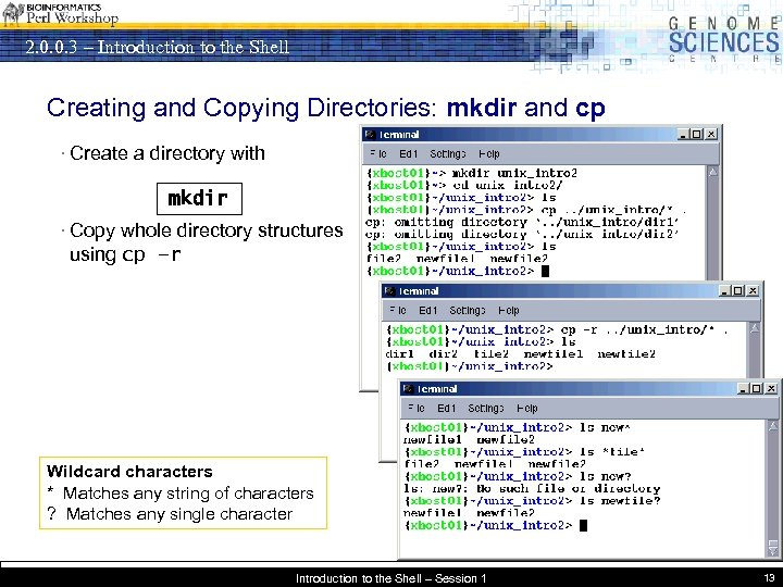 2. 0. 0. 3 – Introduction to the Shell Creating and Copying Directories: mkdir