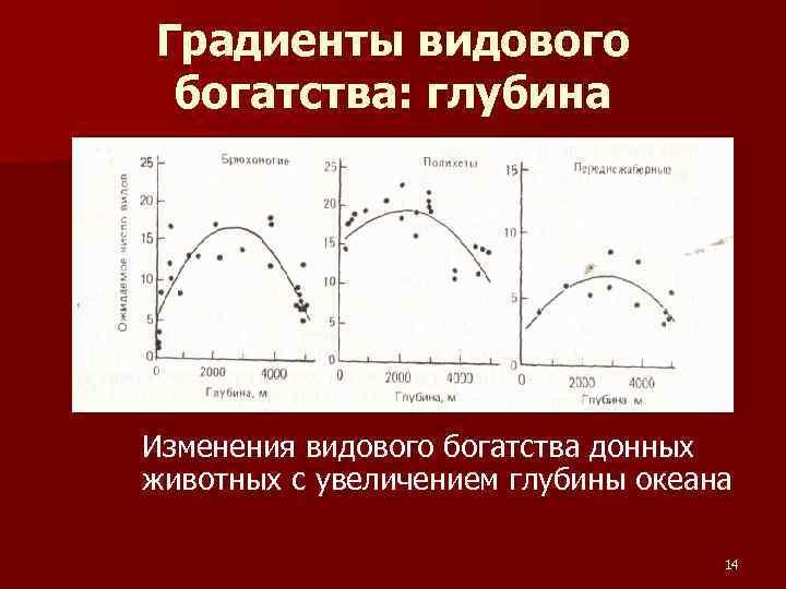 Градиенты видового богатства: глубина Изменения видового богатства донных животных с увеличением глубины океана 14