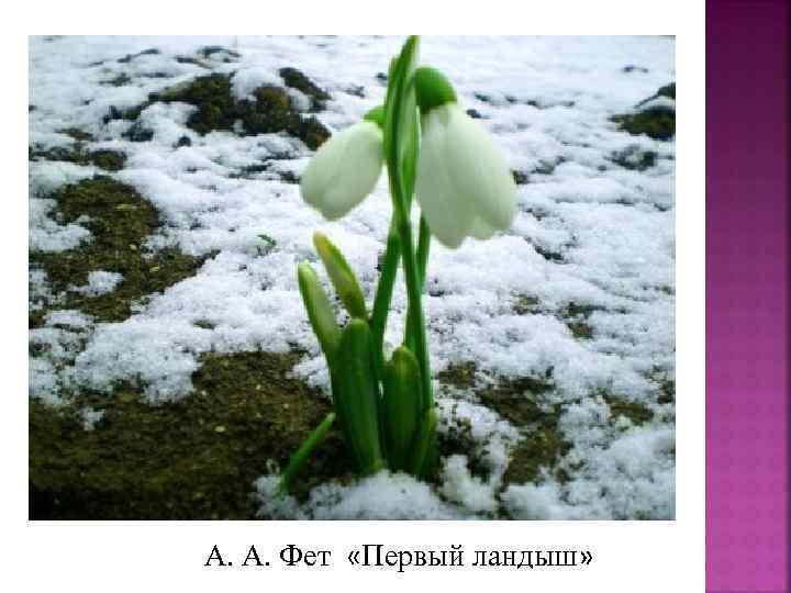 А. А. Фет «Первый ландыш»