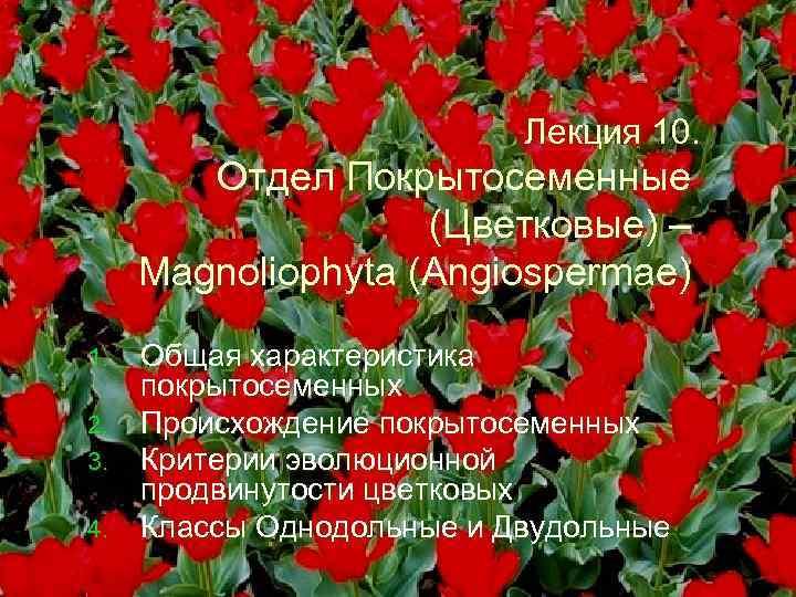 Лекция 10. Отдел Покрытосеменные (Цветковые) – Magnoliophyta (Angiospermae) Общая характеристика покрытосеменных 2. Происхождение покрытосеменных