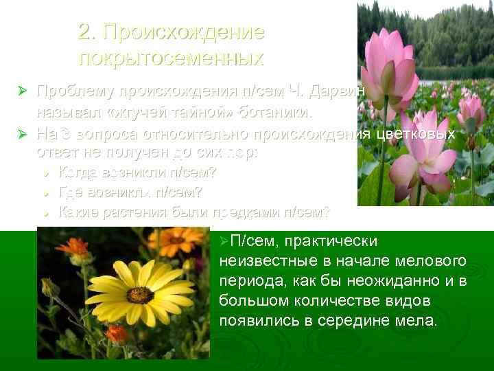 2. Происхождение покрытосеменных Проблему происхождения п/сем Ч. Дарвин называл «жгучей тайной» ботаники. Ø На