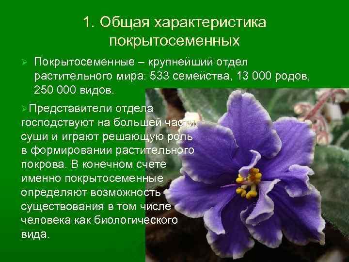 1. Общая характеристика покрытосеменных Ø Покрытосеменные – крупнейший отдел растительного мира: 533 семейства, 13