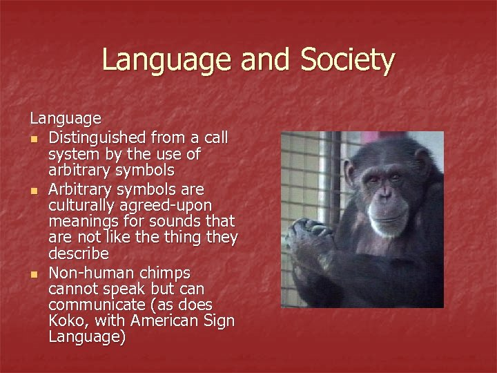 Language and Society Language n Distinguished from a call system by the use of