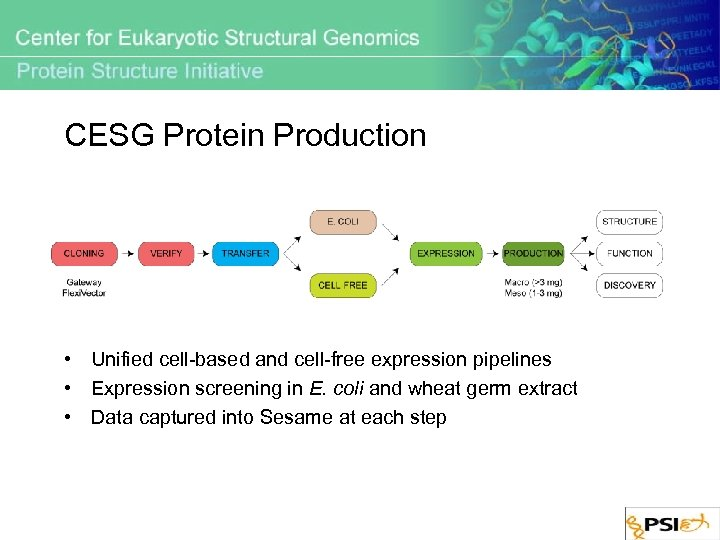 CESG Protein Production • Unified cell-based and cell-free expression pipelines • Expression screening in