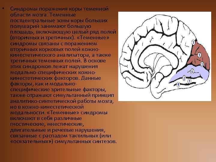• Синдромы поражения коры теменной области мозга. Теменные постцентральные зоны коры больших полушарий