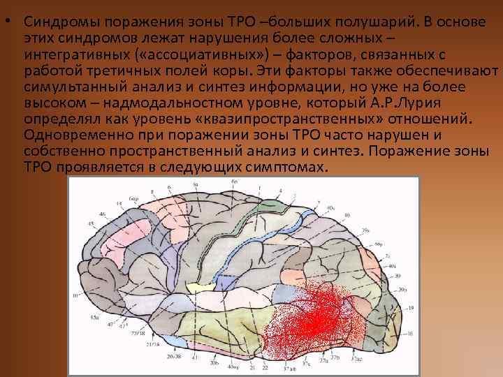 • Синдромы поражения зоны ТРО –больших полушарий. В основе этих синдромов лежат нарушения