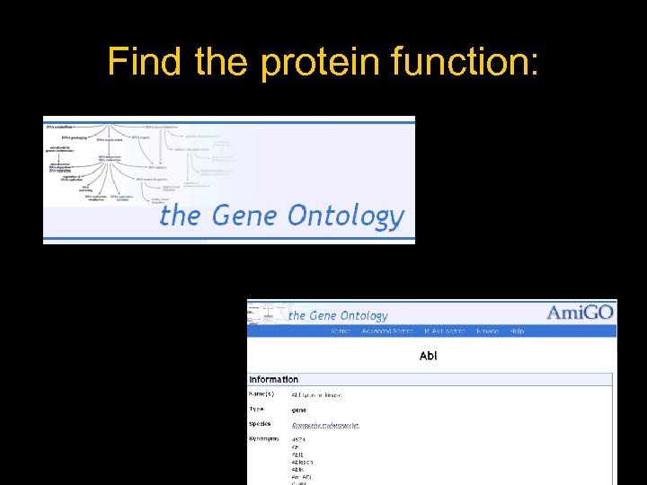 Find the protein function: