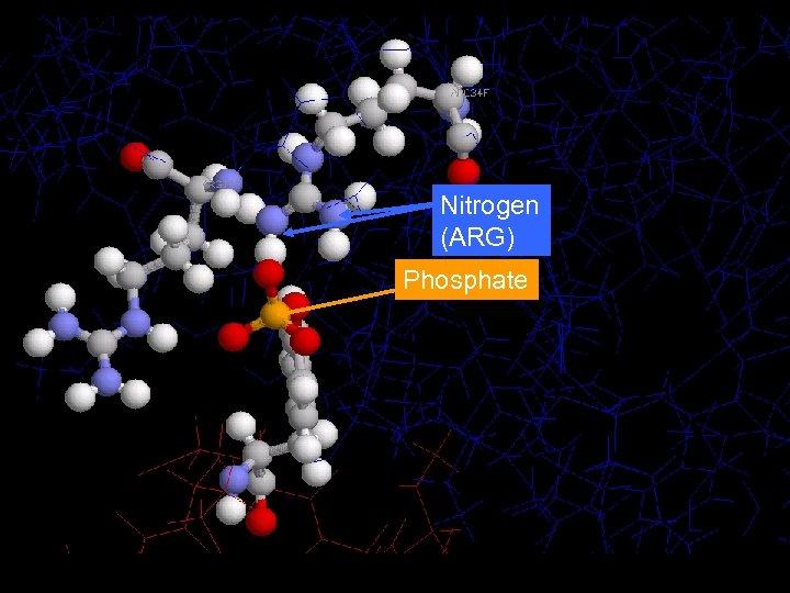 Nitrogen (ARG) Phosphate