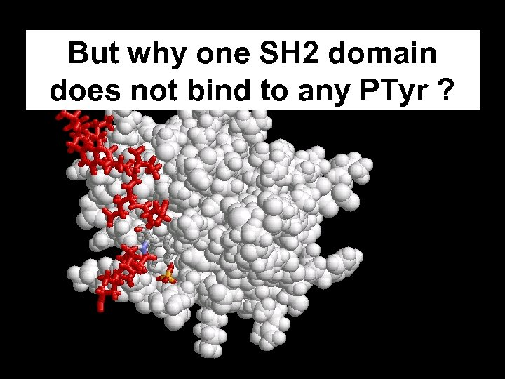 But why one SH 2 domain does not bind to any PTyr ?