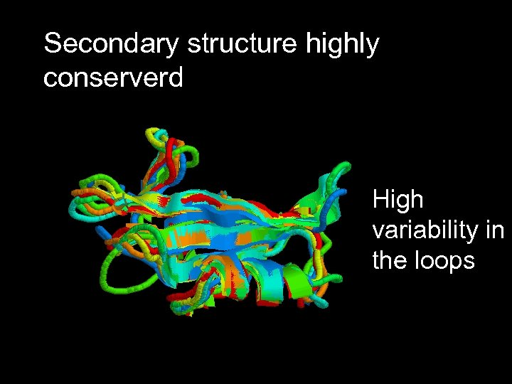 Secondary structure highly conserverd High variability in the loops