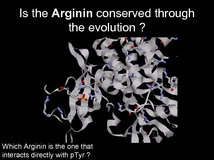 Is the Arginin conserved through the evolution ? Which Arginin is the one that
