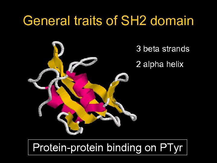 General traits of SH 2 domain 3 beta strands 2 alpha helix Protein-protein binding